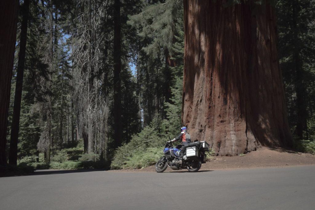 rouler entre sequoia et kings canyon