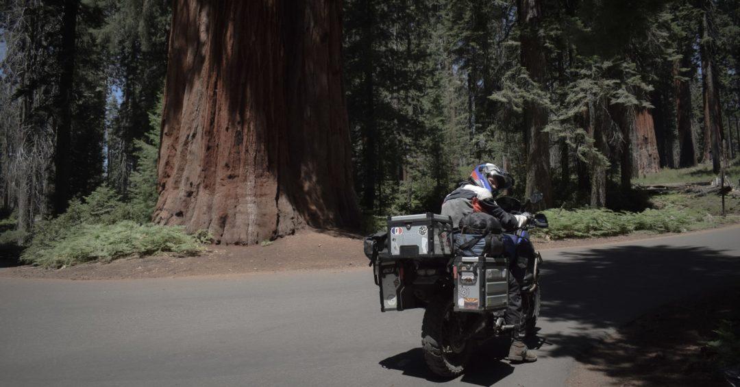 on vous embarque dans le parc national de sequoia