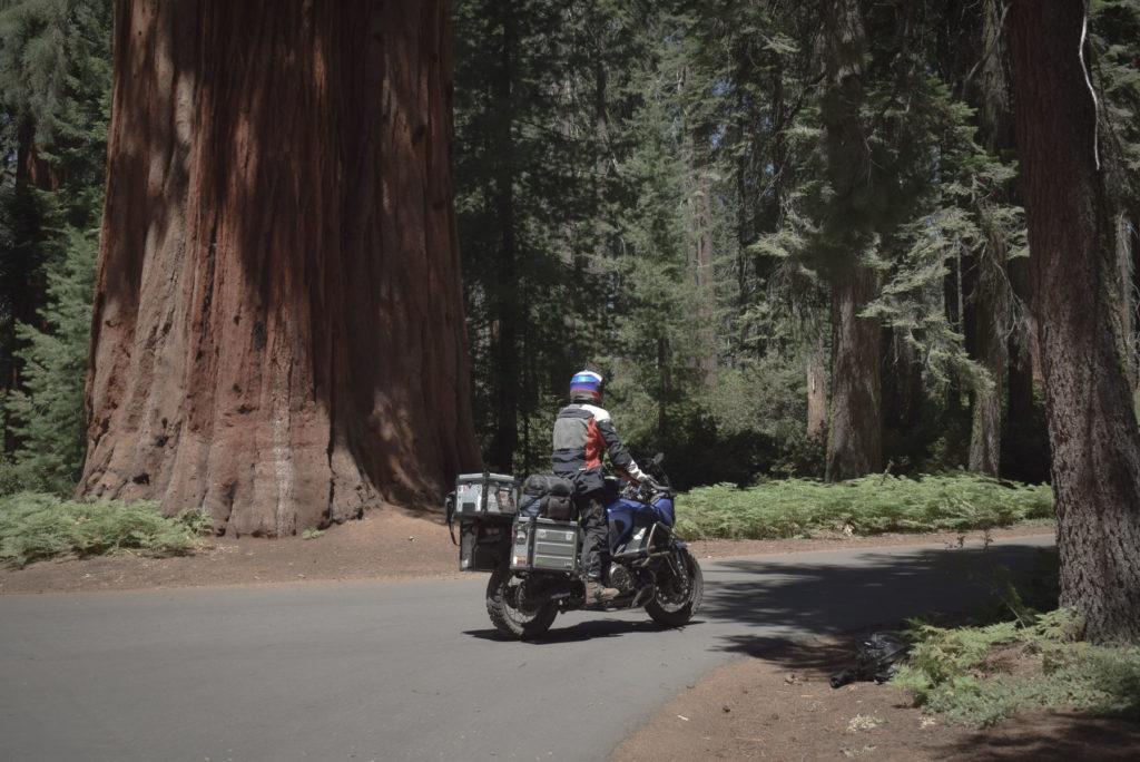 se perdre dans la forêt des géants à Sequoia